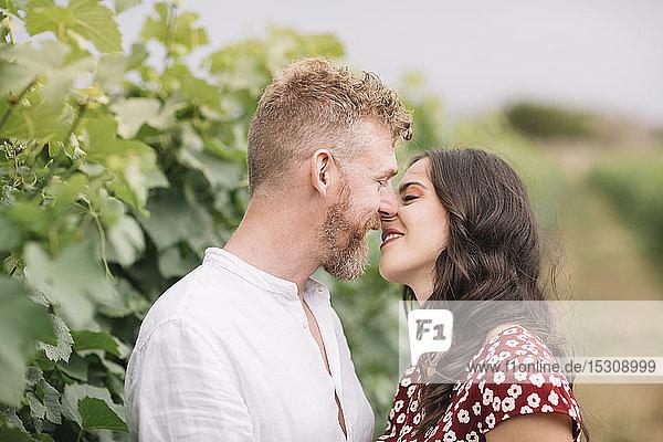 Liebhaber in den Weinbergen