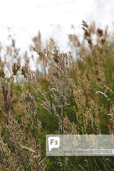 Nahaufnahme von Gras an Land