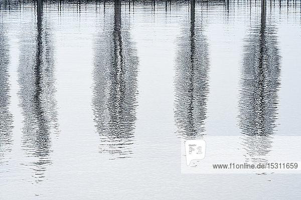 Deutschland  Baden-Württemberg  Kahle Pappeln im Spiegel des Bodensees