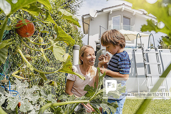 Mother and son caring for vegetable in garden