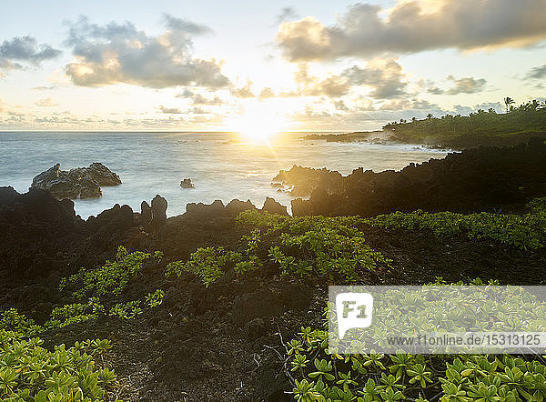 Plants growing at Hana Bay by sea against sky during sunset