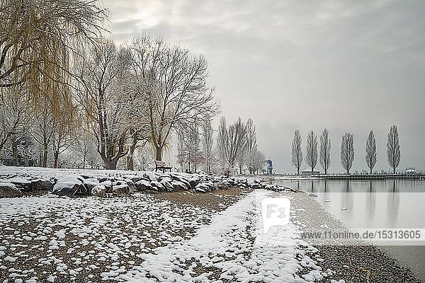 Deutschland  Baden-Württemberg  Kahle Bäume und Schnee am Ufer des Bodensees