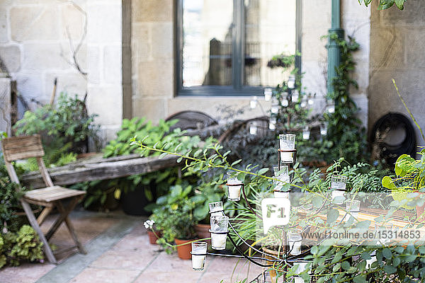 Patio with plants and decoration in Pontevedra  Galicia  Spain