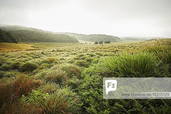 Landschaft im Horton Plains National Park  Nuwara Eliya  Sri Lanka