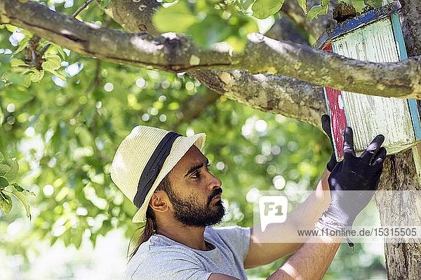 Bärtiger junger Mann befestigt Vogelhaus am Baum