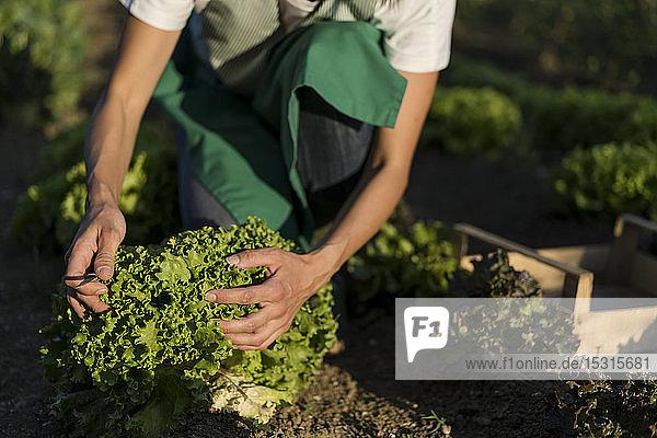 Frau arbeitet in ihrem Gemüsegarten