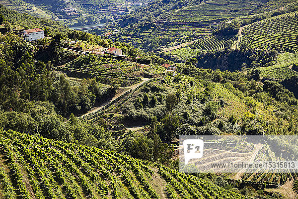 High angle view of vineyards on hills in valley