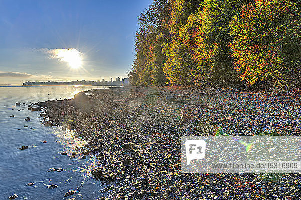 Deutschland  Baden-Württemberg  Herbstliche Bäume am Bodensee