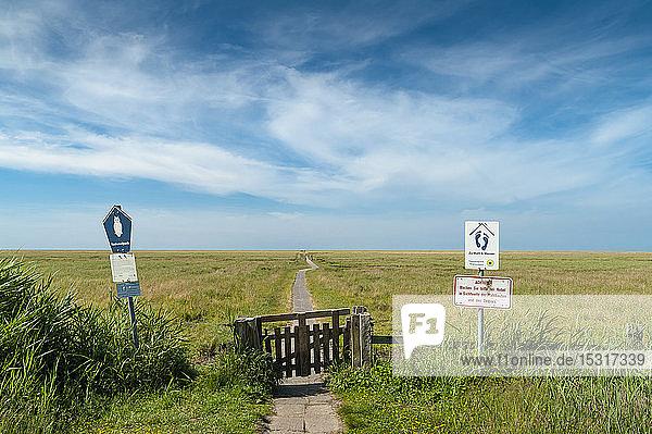 Deutschland  Schleswig-Holstein  Sankt Peter-Ording  Blick vom Deich auf die Salzwiese