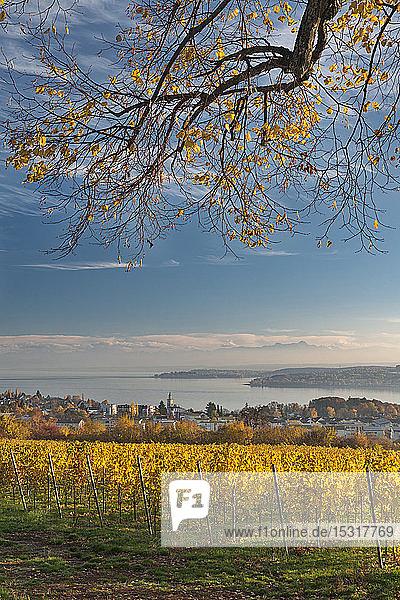 Deutschland  Baden-Württemberg  Uberlingen  Weinberg im Herbst  Bodensee im Hintergrund