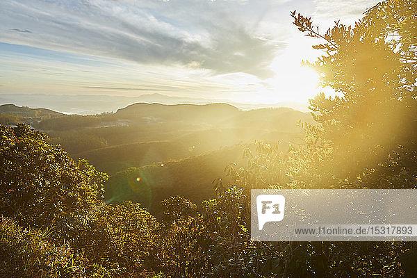 Sonnenaufgang an der Grenze des Horton Plains Nationalparks  Nuwara Eliya  Sri Lanka