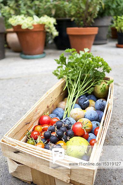 Ernte  verschiedene Arten von Gemüse und Obst im Korb