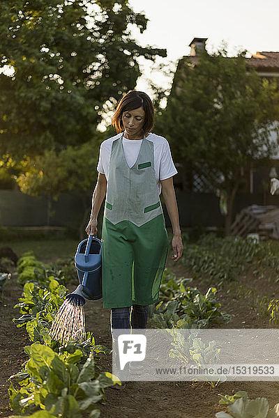 Frau bewässert Gemüsegarten