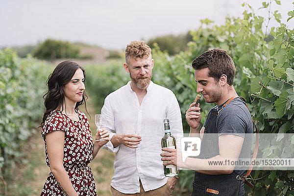 Sommelier riecht Weinkorken aus frisch geöffneter Flasche im Weinberg