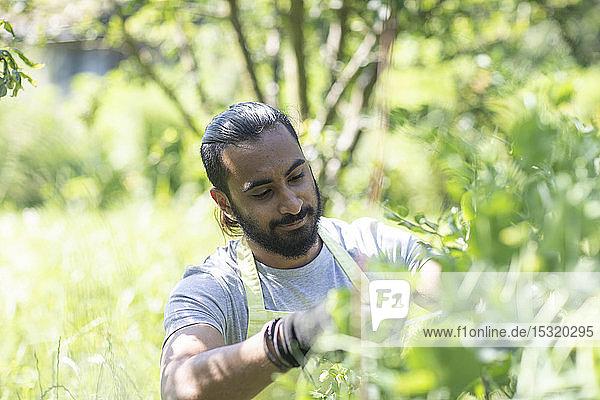 Porträt eines bärtigen jungen Mannes beim Beschneiden von Pflanzen