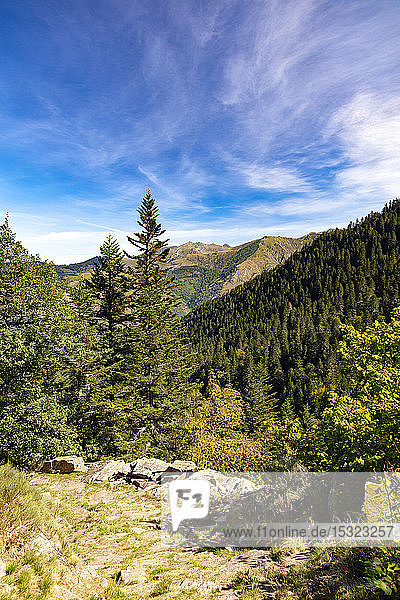 Hiking in the forest,  Couserans-Pyrenees,  vallee d'Ustou,  Ariege,  Occitanie,  France