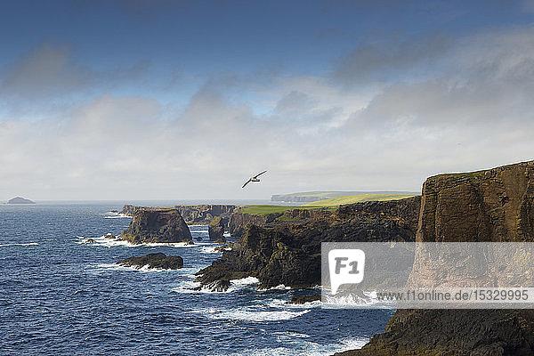 Felsenküste auf den Shetland-Inseln  Vereinigtes Königreich
