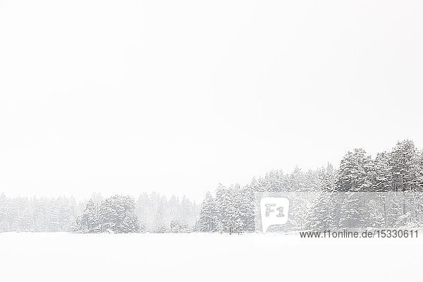 Snowy forest in Lotorp  Sweden
