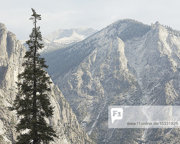 Tree in Kings Canyon National Park in California