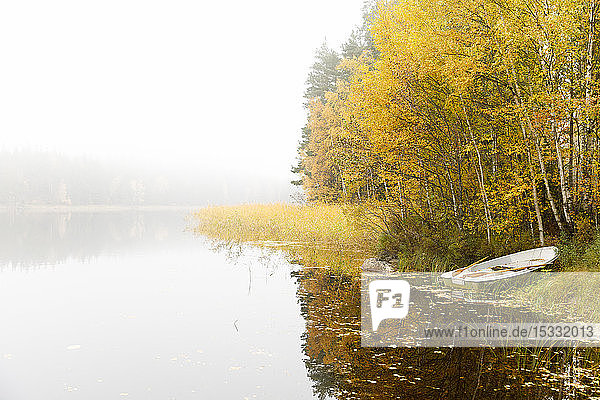 Trees and boat beside lake under fog