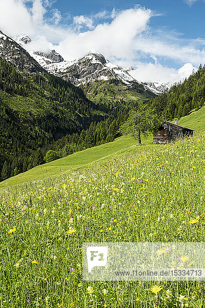 Austria  Tyrol  Allgau Alps  Hornbach valley  a side valley of the Lech watershed  meadow  barn