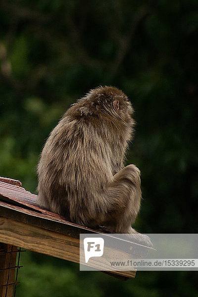 Monkey sitting on roof