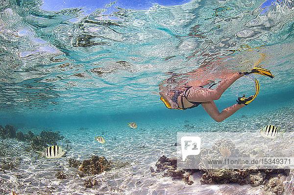 Snorkeling  Roatan  Honduras  Caribbean  Central America