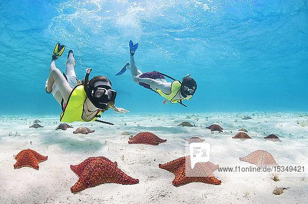 Snorkeling with starfish  Roatan  Honduras  Caribbean  Central America
