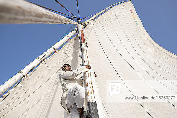 An Egyptian man climbs the mast of a traditional Felucca sailboat with wooden masts and cotton sails on the River Nile  Aswan  Egypt  North Africa  Africa