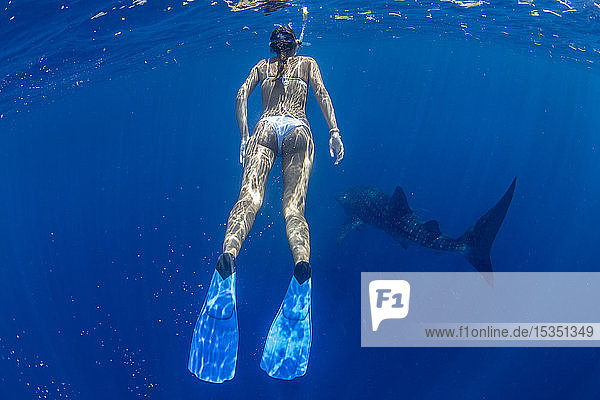 Tourist snorkelling with a whale shark (Rhincodon typus) in Honda Bay  Palawan  The Philippines  Southeast Asia  Asia
