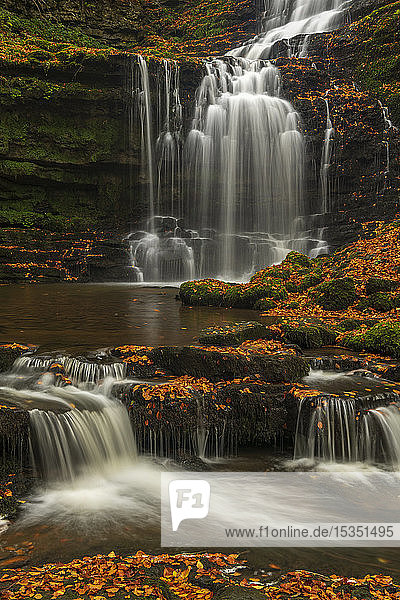 Scalebor Force waterfall in autumn  Yorkshire Dales National Park  North Yorkshire  England  United Kingdom  Europe