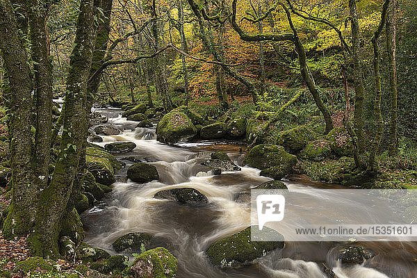 Fast flowing woodland stream  Dartmoor National Park  Devon  England  United Kingdom  Europe
