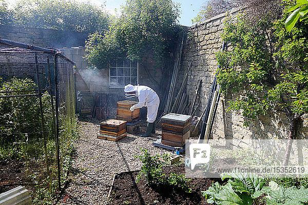 Male beekeeper tending beehive in walled garden