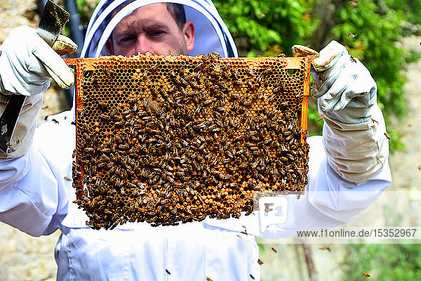 Male beekeeper holding up honeycomb frame in walled garden  portrait
