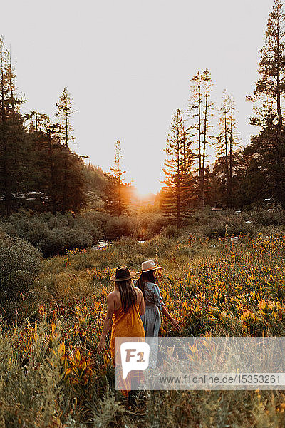 Two women in maxi dresses walking through wildflowers at sunset in rural valley  rear view  Mineral King  California  USA
