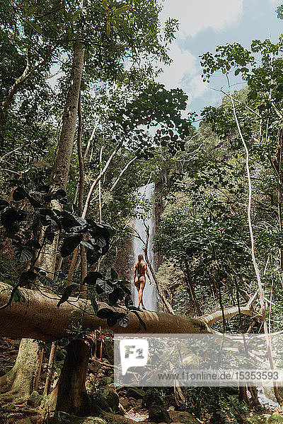 Woman walking on log in rainforest  Princeville  Hawaii  US