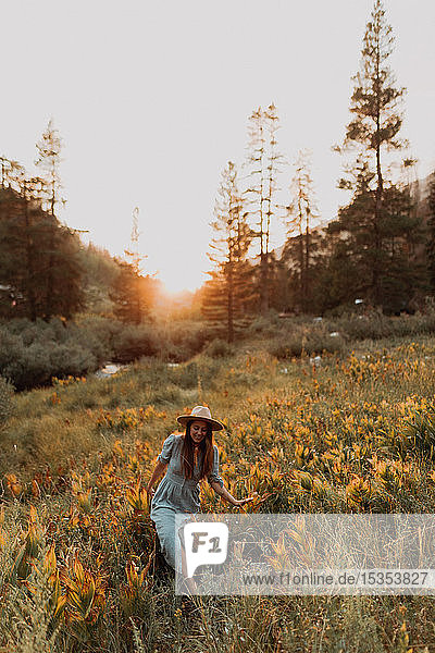 Young woman in maxi dress and stetson walking through wildflowers at sunset in rural valley  Mineral King  California  USA