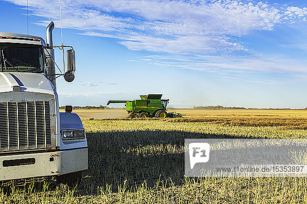 A grain truck waits for its next load during a canola harvest while a combine is at work in the field; Legal  Alberta  Canada