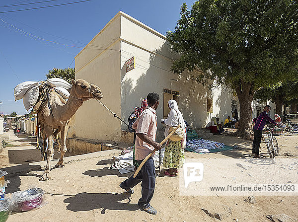 Eritrean people and camel at the open air market; Keren,  Anseba Region,  Eritrea