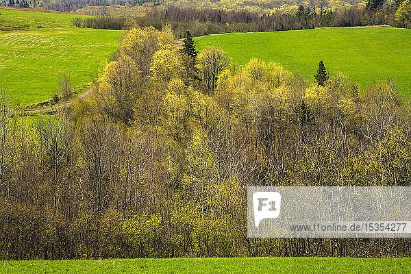 Spring Trees And Fields At Leamington  Nova Scotia