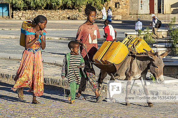 Ethiopian children with a donkey carrying water canisters; Axum  Tigray Region  Ethiopia
