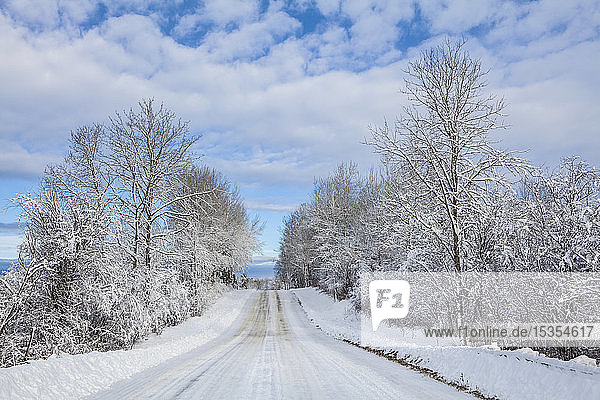 Country road in winter with snow-covered trees; Thunder Bay  Ontario  Canada