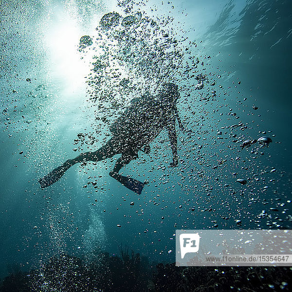Scuba diver obscured by bubbles underwater at the dive site Blue Channel  Roatan Marine Park; Bay Islands Department  Honduras