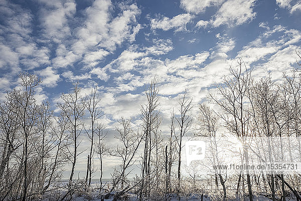 Leafless trees with blue sky and cloud in winter; Thunder Bay  Ontario  Canada