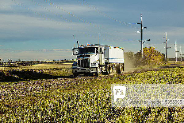 A grain truck traveling down a gravel road to get another load from a canola harvest; Legal  Alberta  Canada