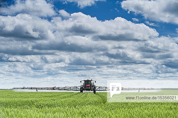 A high clearance sprayer gives a ground chemical application of fungicide to mid-growth wheat  near Dugald; Manitoba  Canada