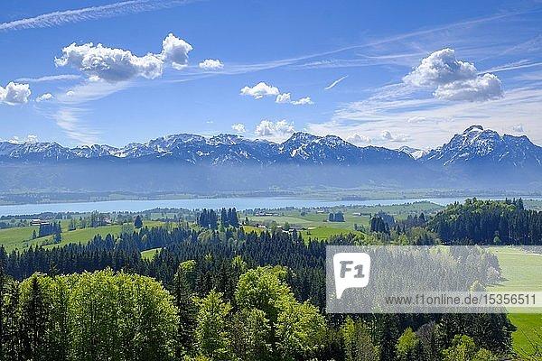 Aussicht vom Buch am Zwieselberg  über den Forggensee auf die Alpen  bei Roßhaupten  Ostallgäu  Allgäu  Schwaben  Deutschland  Europa