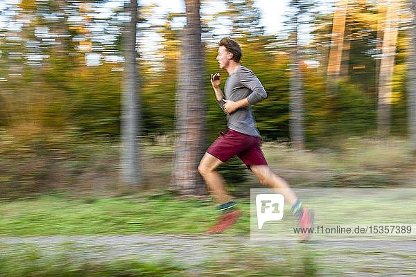 Young man jogging in the autumnal forest  puller  Perlacher Forst  Munich  Upper Bavaria  Bavaria  Germany  Europe