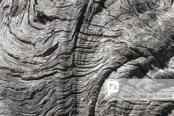 Holzstruktur  Baumstamm eines Olivenbaum (Olea europaea)  Detail  bei Deia  Sierra de Tramuntana  Mallorca  Balearen  Spanien  Europa