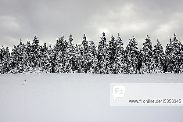 Snow-covered unspoilt winter landscape  snow-covered spruce forest (Picea abies)  grey cloudy sky  Harz National Park  Saxony-Anhalt  Germany  Europe